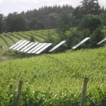 Solar_panels_in_Oregon_vineyard